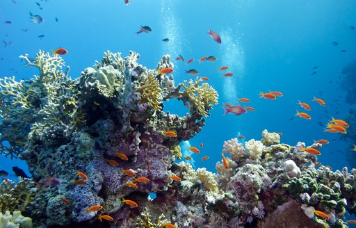 Coral reef in the Caribbean with little fish