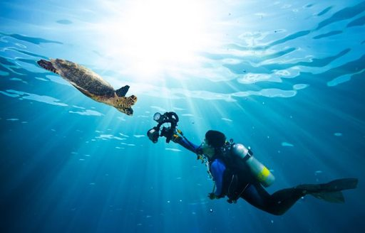 Seychelles diving with a sea turtle