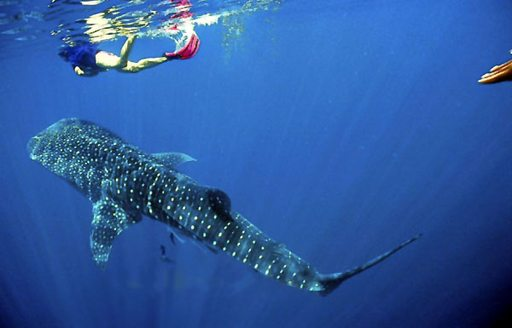 6 Of The Best Dive Spots To Visit On A Thailand Yacht Charter photo 5