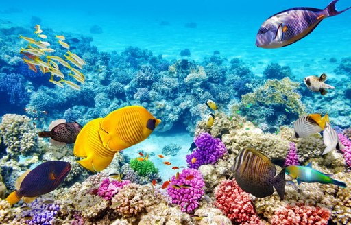 Coral reef near Whitsundays Island in Australia with brightly coloured fish and coral