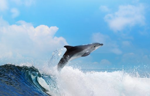 The surrounding waters of Tahiti are home to a plethora of wildlife