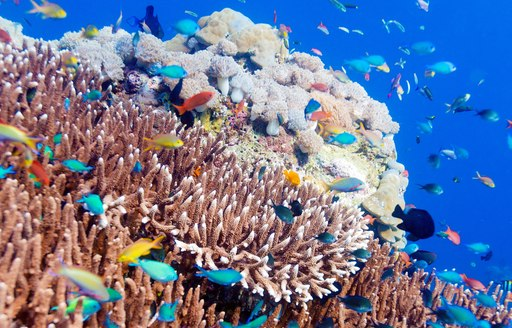 beautifully coloured fish flock to coral in Komodo, Indonesia