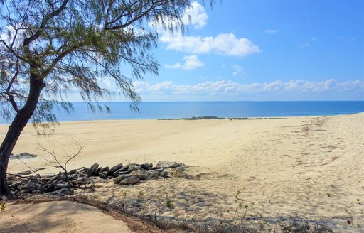 quiet sandy beach on thanda island, with footprints in the sand an ancient tree in forgeound