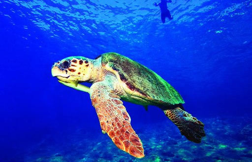 Where to scuba dive on your luxury yacht charter vacation in Turkey photo 3