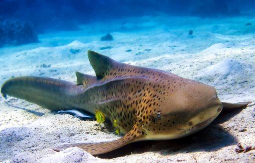 A sea creature along the seabed