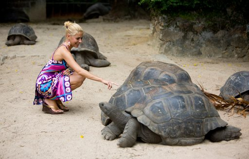 Lady touching turtles in Seychelles