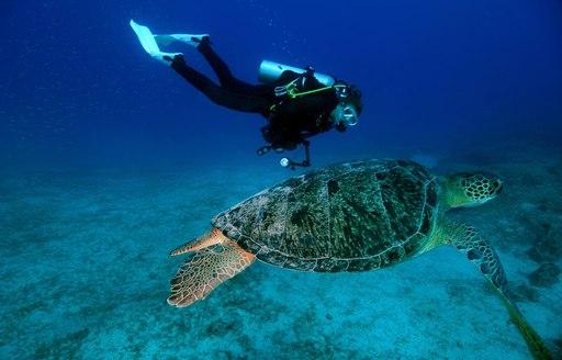 scuba diver swims alongside a sea turtle in the Great Barrier Reef, Australia