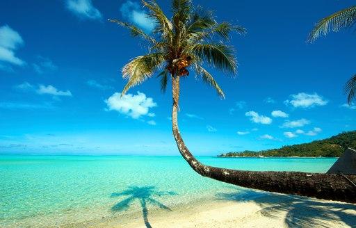 Palm tree on Tahiti Beach