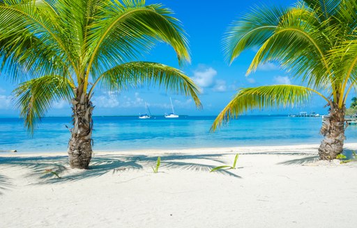 Sandy beach in Belize looking out to sea, with palm trees in foreground