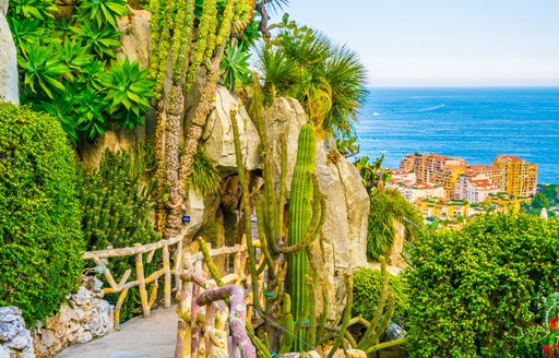 pathway in jardin exotique monaco, with cacti and sea view in background