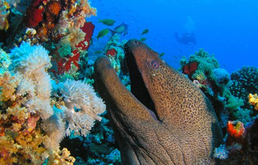 6 Of The Best Dive Spots To Visit On A Thailand Yacht Charter photo 8