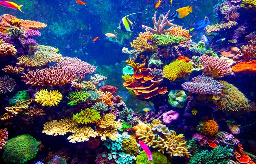 Brightly coloured coral reef in the Caribbean with fish and sealife