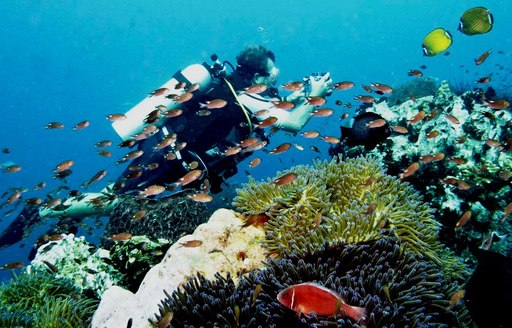 6 Of The Best Dive Spots To Visit On A Thailand Yacht Charter photo 2