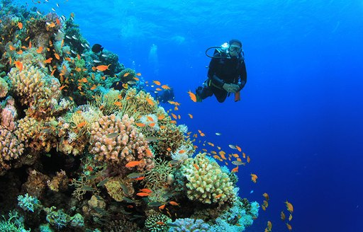 6 Of The Best Dive Spots To Visit On A Thailand Yacht Charter photo 3