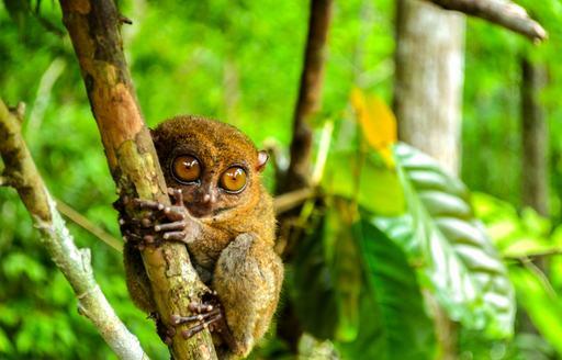 Wildlife in Thai rainforest