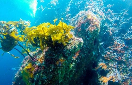 scuba diving at Poor Knights Islands Marine Reserve, New Zealand
