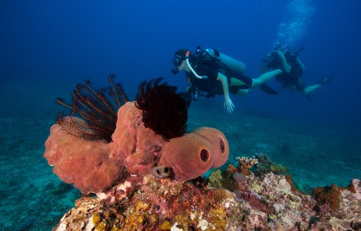 Scuba divers on the reef in St Kitts and Nevis