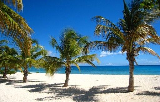 Palm trees on Aguilla beach