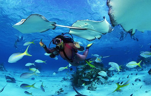 Scuba diving with fish Seychelles