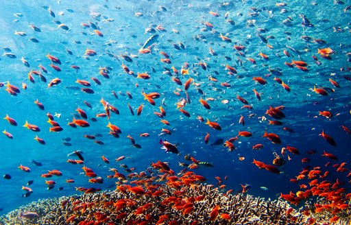 colourful fish in crystal clear waters of Indonesia