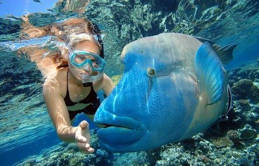 Unusual fish in great barrier reef