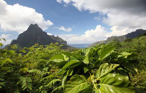 Brand New Sail Yacht Ohana in Tahiti photo 15