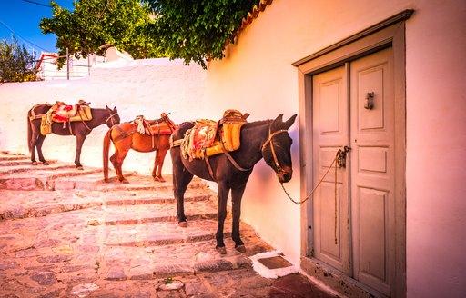 Donkeys in Hydra, Greece