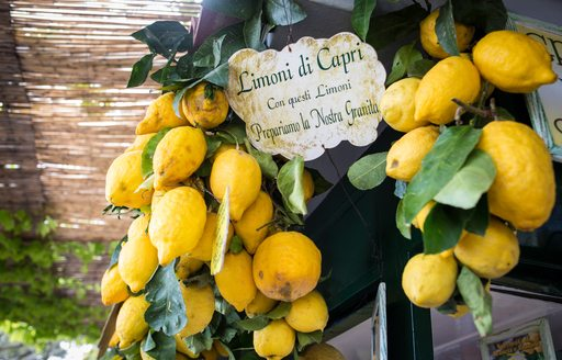 Hanging bunch of lemons from Capri, Italy