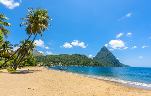 Landscape shot of Caribbean island with palm tree, beach and scenery