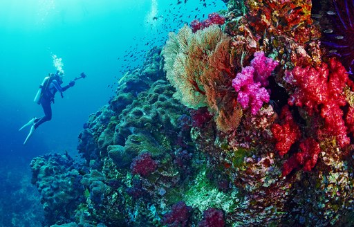Colourful coral reef in Galapagos