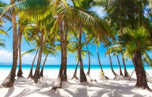 palm tree line white sandy beach in the Bahamas