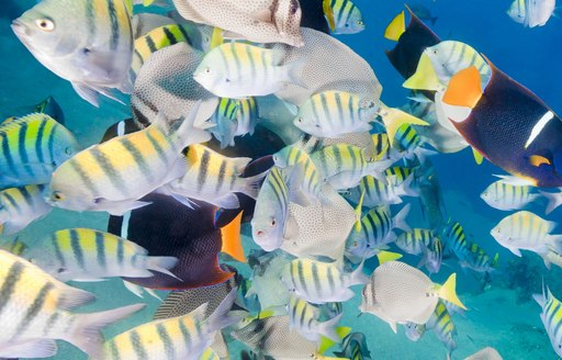 colourful tropical fish in crystal clear waters of Central America