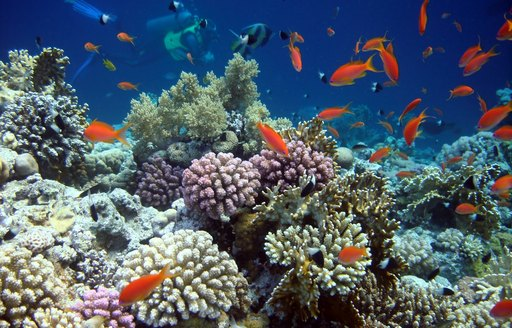 colourful coral and fish in the waters of Thailand