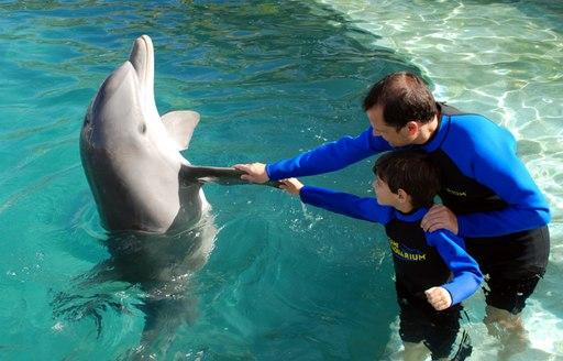 people dolphin training at Miami Seaquarium