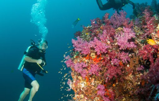 6 Of The Best Dive Spots To Visit On A Thailand Yacht Charter photo 4