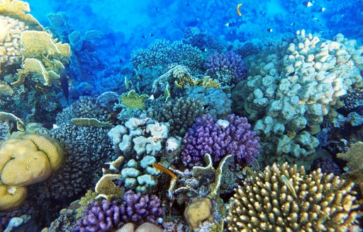 Multicolored coral and plants