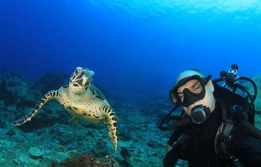 Sea turtles in Fiji