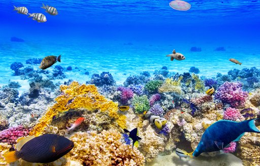 Number of colorful fish swimming around coral