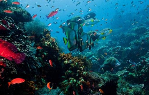 vibrant underwater life in Raja Ampat islands, Indonesia