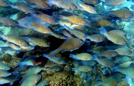 A shoal of fish photographed up close