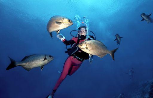 Scuba diver and fish, BVI