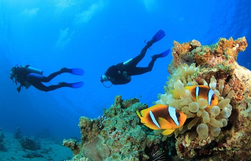 Where to scuba dive on your luxury yacht charter vacation in Turkey photo 7