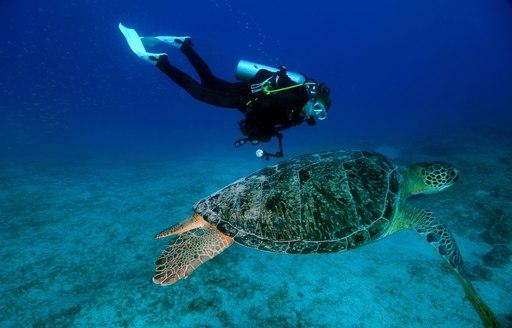 scuba diver swims alongside giant sea turtle in the Great Barrier Reef, Australia