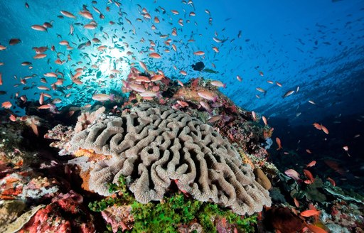 colourful coral and fish in the crystal clear waters of Komodo