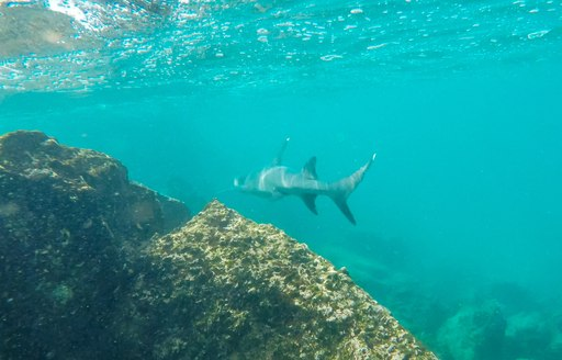 5 reasons why the Galapagos should be on your radar for a luxury yacht charter photo 22