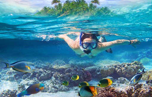 Underwater photo of person snorking with coral and colorful fish beneath them