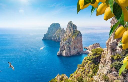 View through lemons over Capri