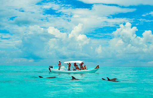 Wild dolphin watching in the Caribbean Sea. Eco tourism.