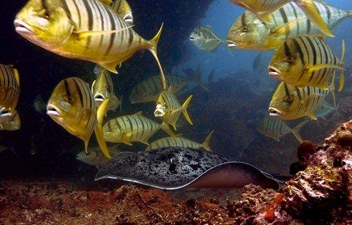 Seychelles fish