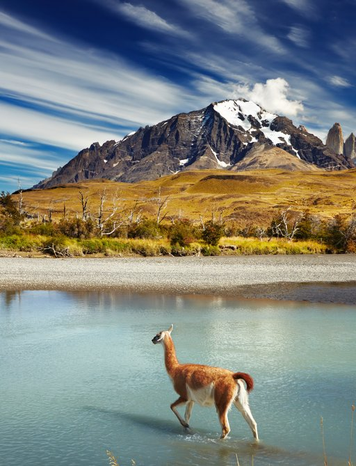 cute little goat in chile crossing river, with mountain backdrop in background